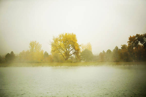 Photograph - Cottonwood And Mist by Marilyn Hunt