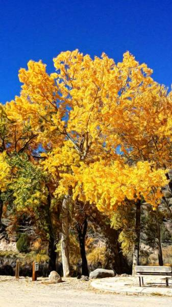 New Leaf Mixed Media - Cottonwood Autumn by Jim Buchanan