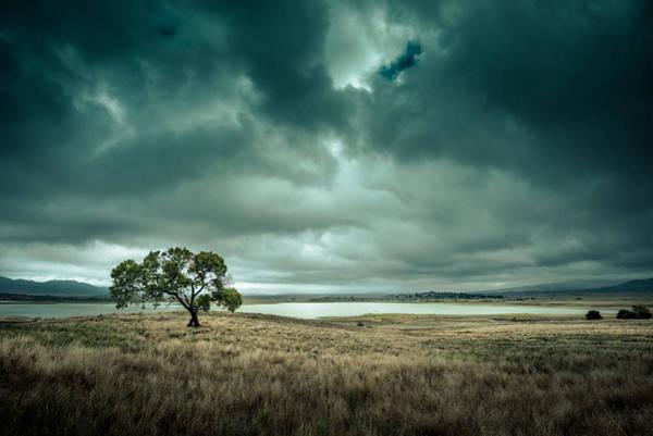 Photograph - Cottonwood In October 2013 by Alexander Kunz