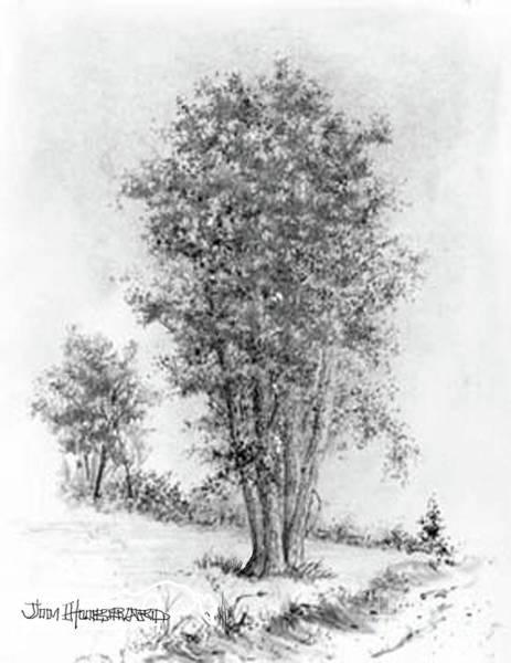 Wall Art - Drawing - Cottonwood by Jim Hubbard