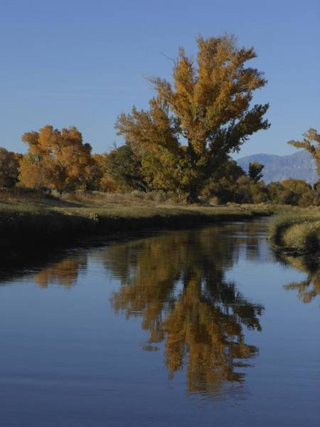 Photograph - Cottonwood Trees And Reflections by Don Kreuter