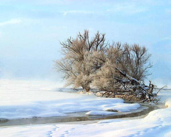 Photograph - Cottonwoods On Spring Creek by TL  Mair