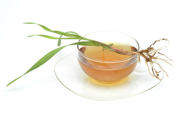 Tonic Photograph - Couch Grass Tea by Bildagentur-online/th Foto/science Photo Library