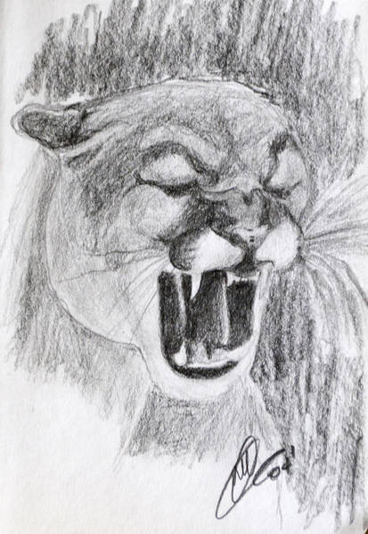 Drawing - Cougar 2 by Wade Clark