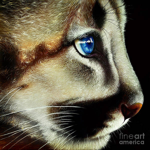 Wall Art - Painting - Cougar Cub by Jurek Zamoyski