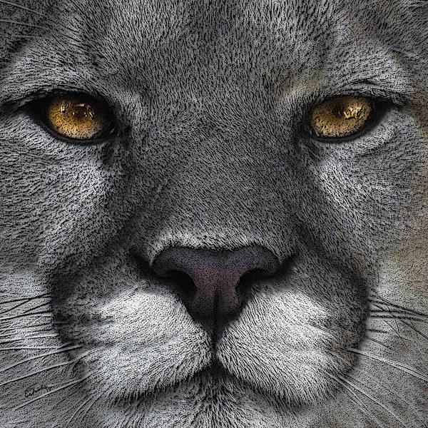 Mountain Lion Digital Art - Cougar Eyes by Ernie Echols