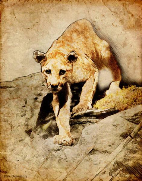 Puma Digital Art - Cougar Hunting by Ray Downing