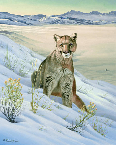 Lions Painting - 'cougar In Snow' by Paul Krapf