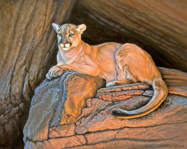 Mountain Lion Painting - Cougar by Paul Krapf