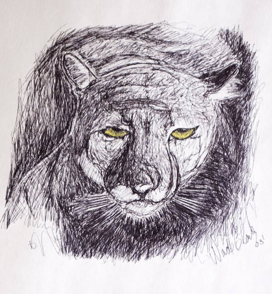 Drawing - Cougar Sketch 3 by Wade Clark