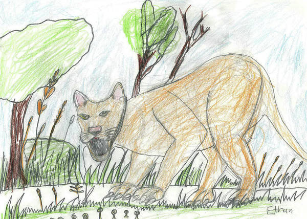 Drawing - Cougar Watching by Fred Hanna