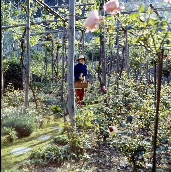 Wall Art - Photograph - Countess Bismark In Her Rose Garden by Horst P. Horst