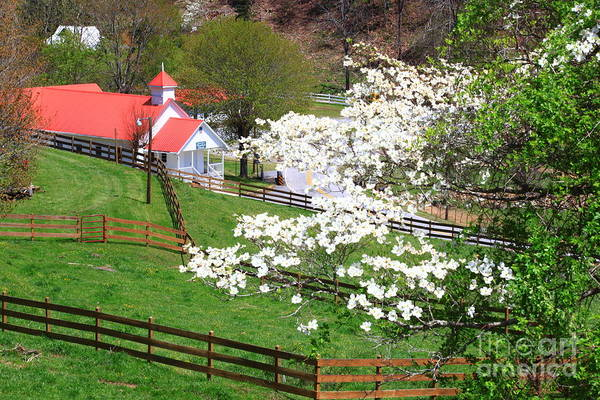 Photograph - Country Church In The Springtime by Jill Lang