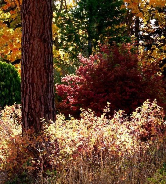 Okanagan Valley Digital Art - Country Color 28 by Will Borden