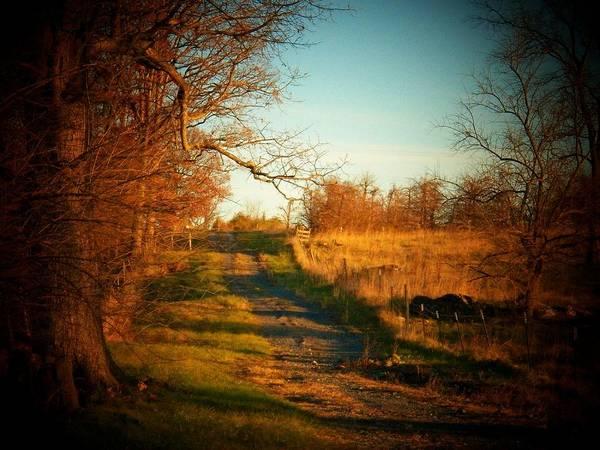 Frederick County Wall Art - Photograph - Country Lane by Joyce Kimble Smith