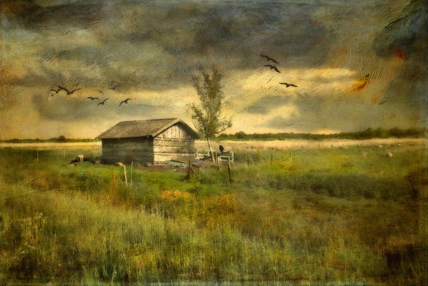 Photograph - Country Life by Annie Snel