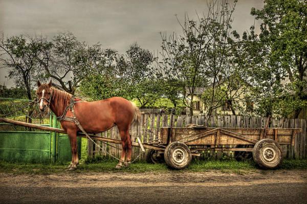 Wall Art - Photograph - Country Life by Evelina Kremsdorf