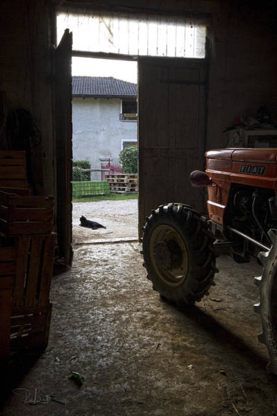 Photograph - Country Life by Raffaella Lunelli
