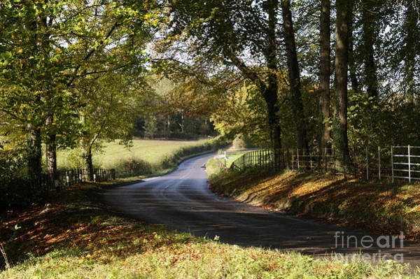 Coppice Photograph - Country Road by Doug Wilton