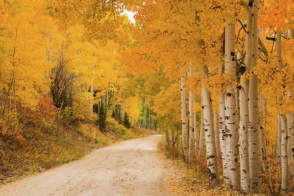 Steamboat Springs Photograph - Country Road In Fall Season by David Epperson