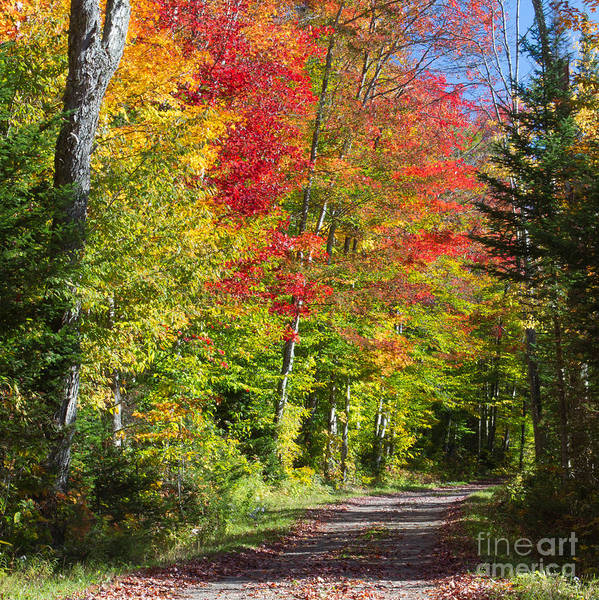 Photograph - Country Road Ny 2 by Chris Scroggins