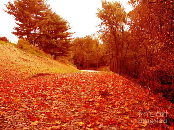 Photograph - Country Road With Falling Leaves by Christopher Shellhammer