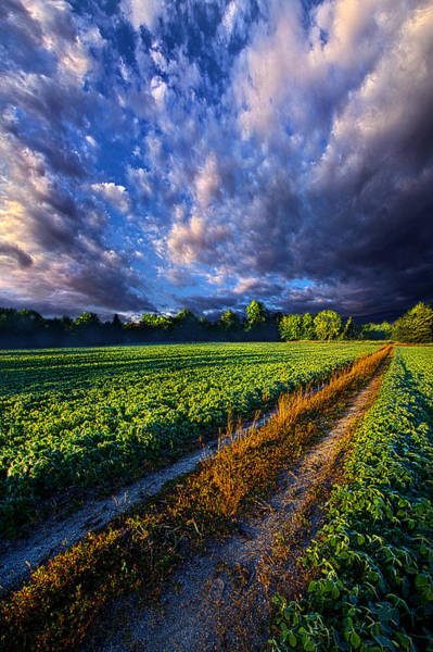 Photograph - Country Roads by Phil Koch