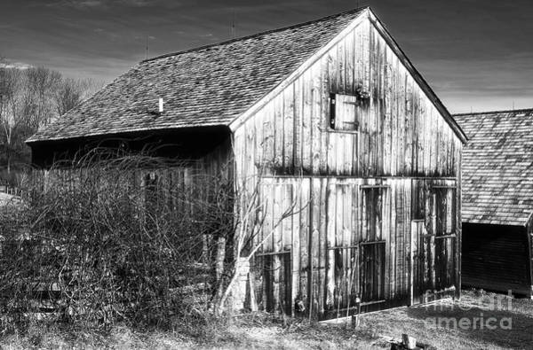 Photograph - Country Time by John Rizzuto
