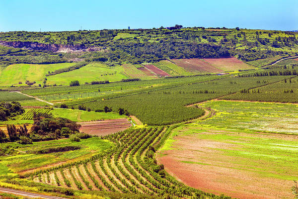 Wall Art - Photograph - Countryside Farmland, Obidos, Portugal by William Perry