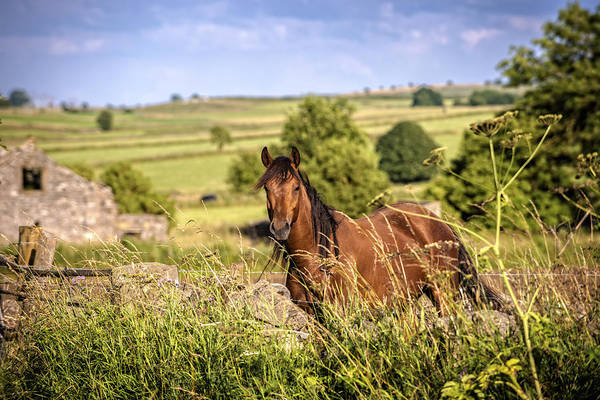 Moorland Photograph - Countryside Horse by Amanda Elwell