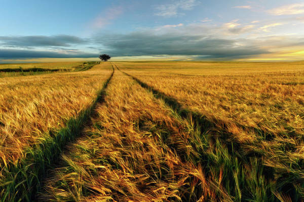 Growth Photograph - Countryside by Piotr Krol (bax)