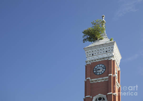 Photograph - County Courthouse With Tree by Jim West