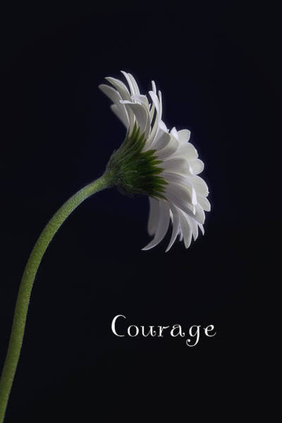Photograph - Courage by Kim Andelkovic