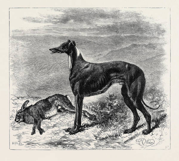 Wall Art - Drawing - Coursing Master Mgrath by English School
