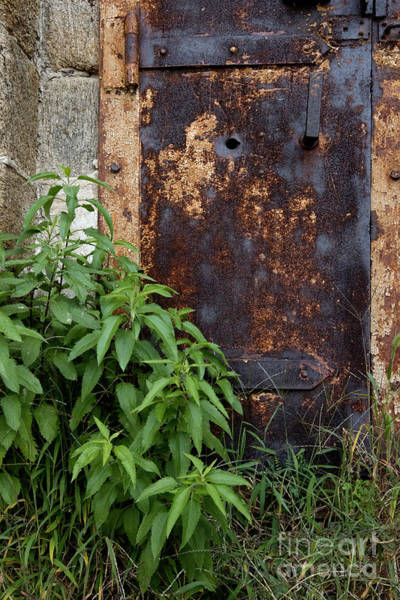 Wall Art - Photograph - Covered In Rust by Paul W Faust -  Impressions of Light