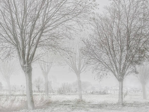 Rural Photograph - Covered With A White Quilt by Yvette Depaepe