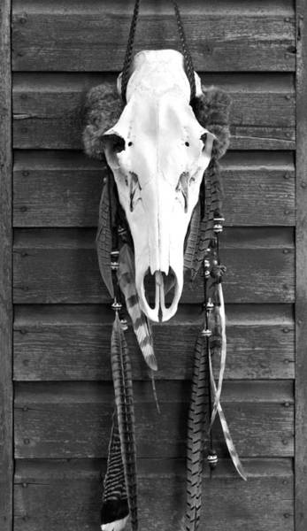 Wall Art - Photograph - Cow Elk Skull And Feathers by Karon Melillo DeVega
