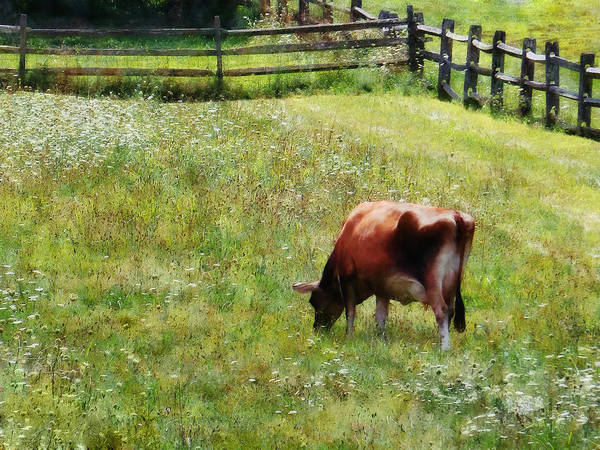 Photograph - Cow Grazing In Pasture by Susan Savad