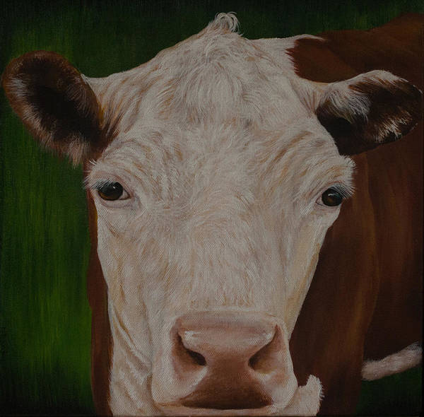 Hereford Bull Painting - Cow Lick by Nancy Lauby