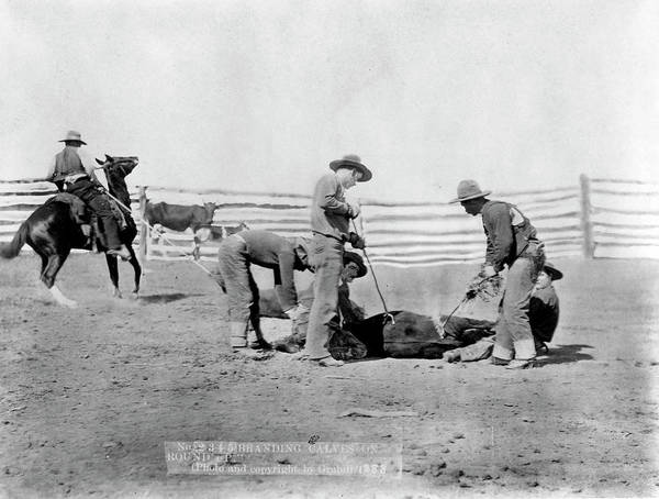 Branding Iron Photograph - Cowboys, 1888 by Granger