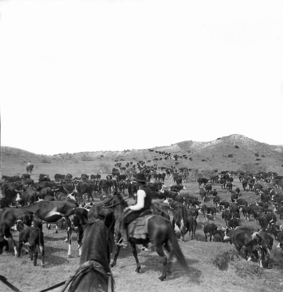 1911 Photograph - Cowboys Ready For Round-up by Underwood Archives