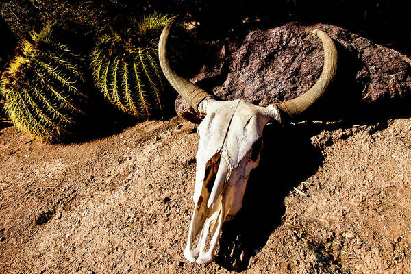 Wall Art - Photograph - Cowl Skull Out In The Desert, Tucson by Julien Mcroberts