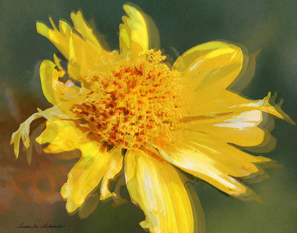 Painting - Cowpen Daisy No. 4 by Susan Schroeder