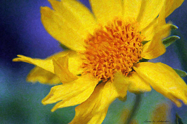 Painting - Cowpen Daisy No. 5 by Susan Schroeder