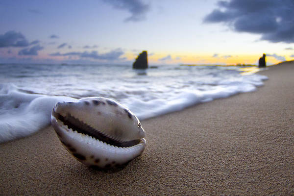 Water Wall Art - Photograph - Cowrie Sunrise by Sean Davey