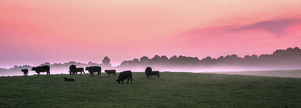 Wall Art - Photograph - Cows At Sunset by Walter Arnold Photography