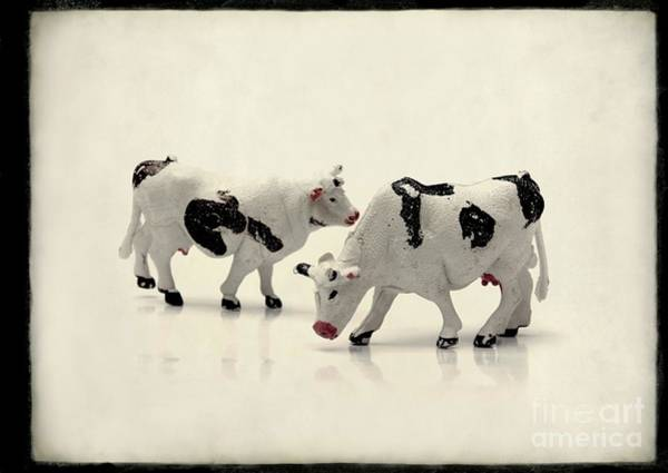Wall Art - Photograph - Cows Figurines by Bernard Jaubert