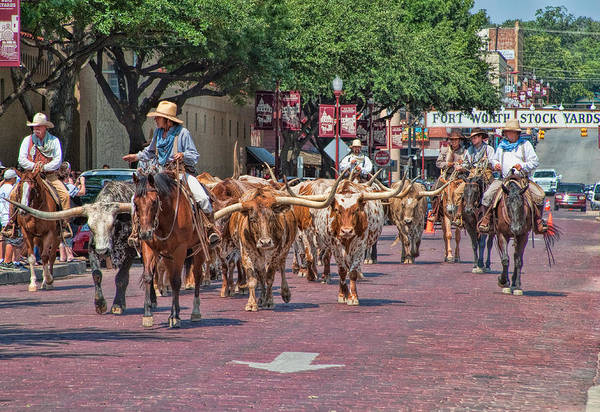 Longhorns Wall Art - Photograph - Cowtown Cattle Drive by David and Carol Kelly