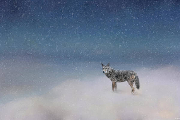 Photograph - Coyote In Winter by Jai Johnson