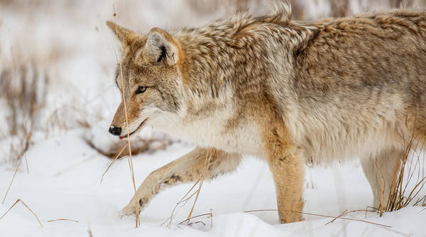 Photograph - Coyote Nez by Kevin  Dietrich